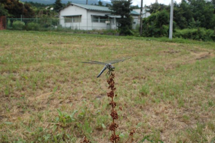 siokaratonbo.jpg